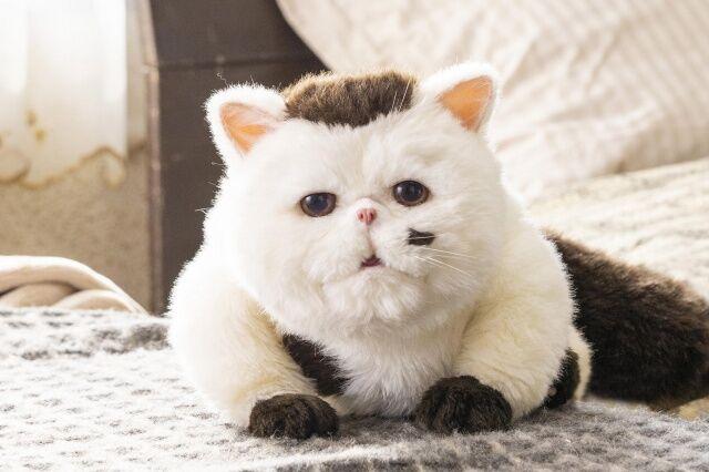 【漫画】【ドラマ】「おじさまと猫」涙腺キラードラマな件【同時に癒される〜!!】【感想】