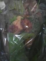 よっぴさんからの花束!