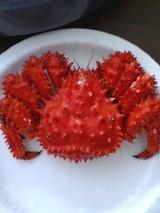 美味しい蟹!!!