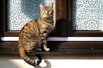 cat-4079873_640