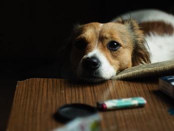 dog-3412107_640 pixabay