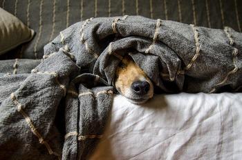 https://pixabay.com/ja/photos/犬-動物-ペット-哺乳動物-5021084/