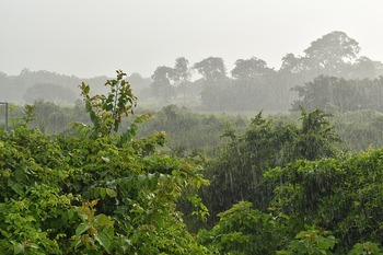 https://pixabay.com/ja/photos/雨-雨の日-滴-霧雨-自然-2683964/