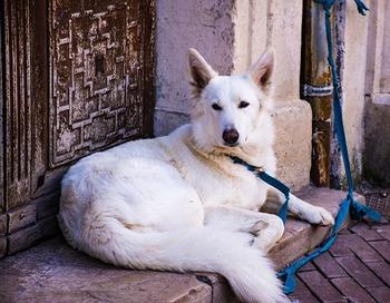 dog-4044915_640
