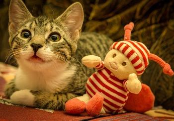 cat-4747003_640