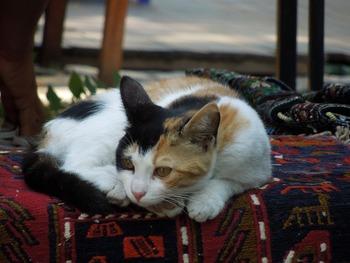 https://pixabay.com/ja/photos/猫-動物-ペット-161459/