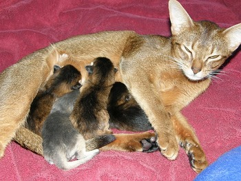 mother-cat-1220432_640
