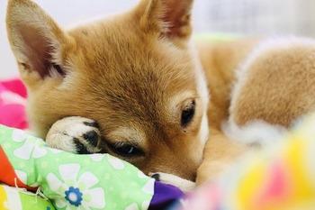 puppy-3961985_640