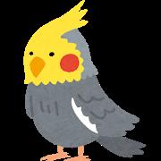 bird_okameinkogray