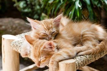 https://pixabay.com/ja/photos/子猫-ペット-眠っている-猫-1916542/