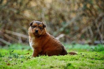 puppy-5106750_640