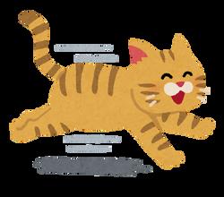 run_cat_smile