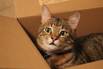 https://pixabay.com/ja/photos/猫-ネコ-動物-ハローキティ-5453535/