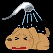 pet_ofuro_kirai_dog