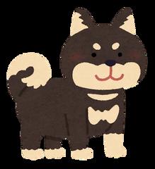 dog_shibainu_black 黒柴