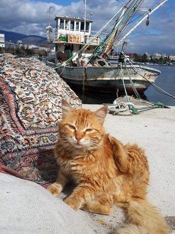 https://pixabay.com/ja/photos/トルコ-イズミル-海洋-猫-965407/