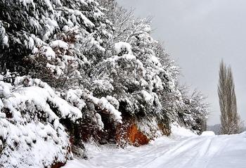https://pixabay.com/ja/photos/雪-冬-霜-風邪-3063418/