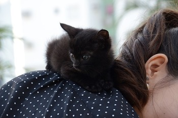 kitten-1739239_640