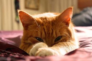https://pixabay.com/ja/photos/猫-オレンジ色の猫-生姜猫-1347176/