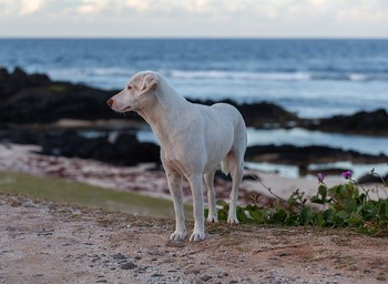 stray-dog-on-beach-4520342_640