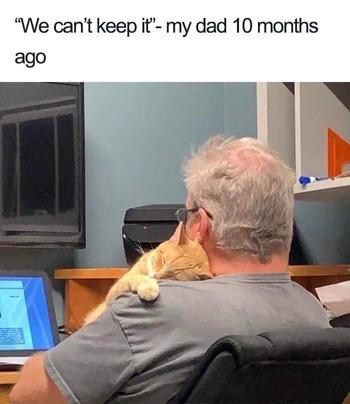 【画像】父「猫を飼いたい?ダメだ!」→10ヶ月後…
