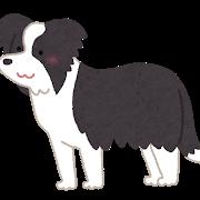 dog_Border_Collie