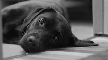 dog-3135777_640