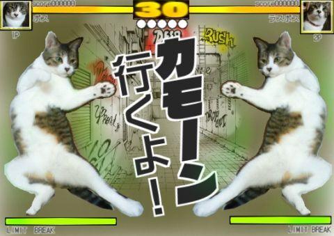 格闘ゲームSTREETCATSFIGHT