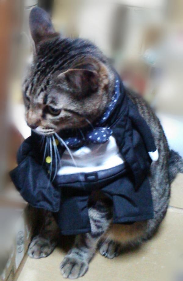 学ラン猫 (4)