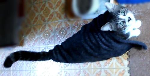 毛布をマントにする猫
