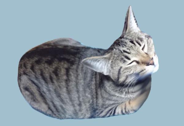 キャットマウス1