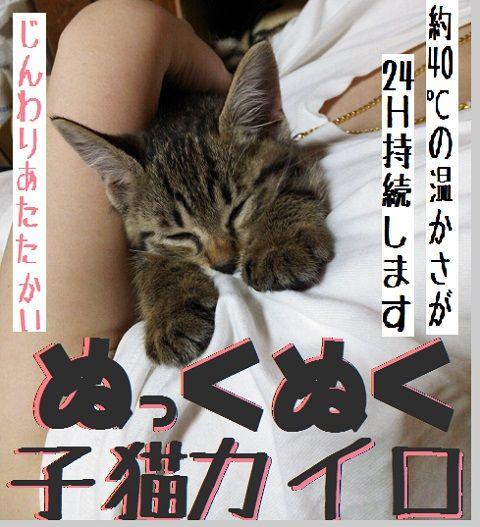 ぬくぬく子猫カイロ1