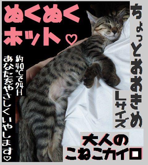 ぬくぬく子猫カイロ2