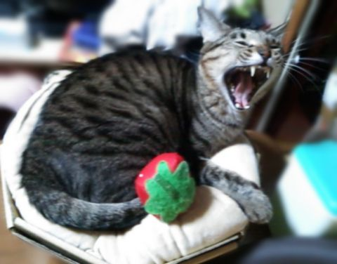 ね子猫カップケーキ (4)