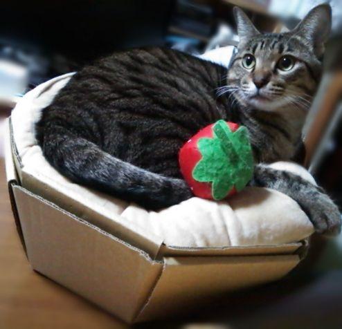 ね子猫カップケーキ (3)