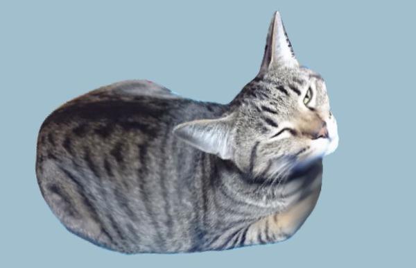 キャットマウス2