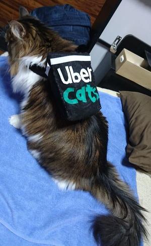 UverCats (4)
