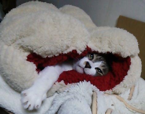 ボスさんは寝袋から出てこない