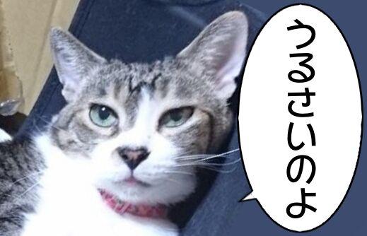 化け猫予備軍