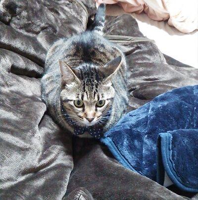 カインズ 吸湿発熱毛布 (2)