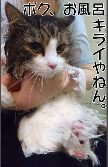 マーお風呂3