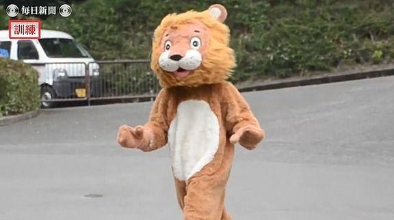 【速報】 愛媛・とべ動物園「ライオン脱走」に備え着ぐるみで訓練 訓練を見つめるホンモノ 英メディアが報じる ※動画