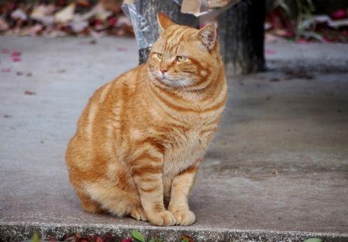【悲報】 世田谷区に野生のネコ出現 周辺住民に警戒呼びかけ