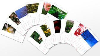 flower_01-12_sample