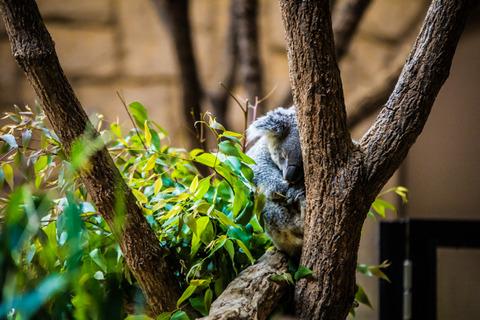 東山動物園-4