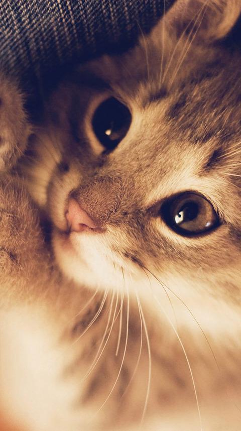 まるで自撮り猫の動物壁紙