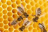 honeycomb-s
