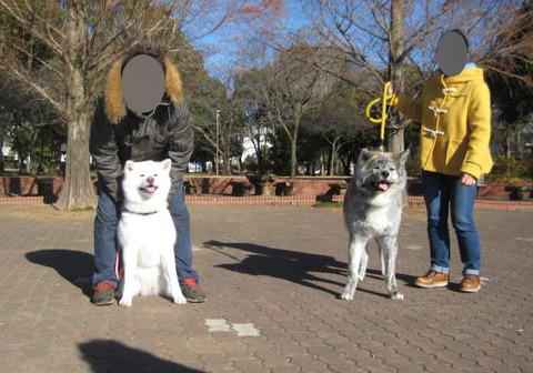 12-16秋田犬・集合-5