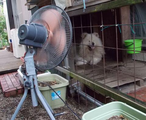 扇風機の出番だよ