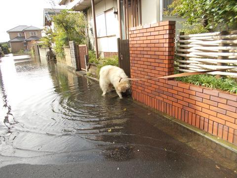 台風26号後-2